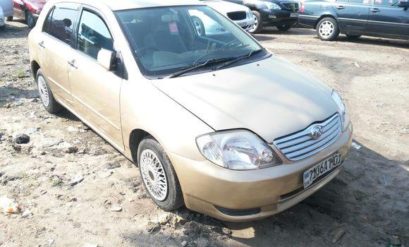 Voiture à vendre Toyota Allex Autre - Kinshasa - Kasa Vubu